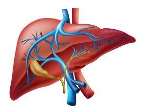 Низкая температура при циррозе печени — Печень и её здоровье