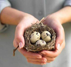 Чем полезны перепелиные яйца для печени